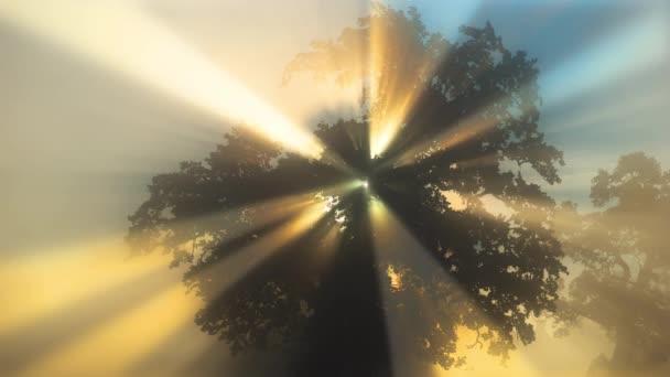 vykreslování slunečních paprsků filtrovaných listím dubu v časných ranních hodinách