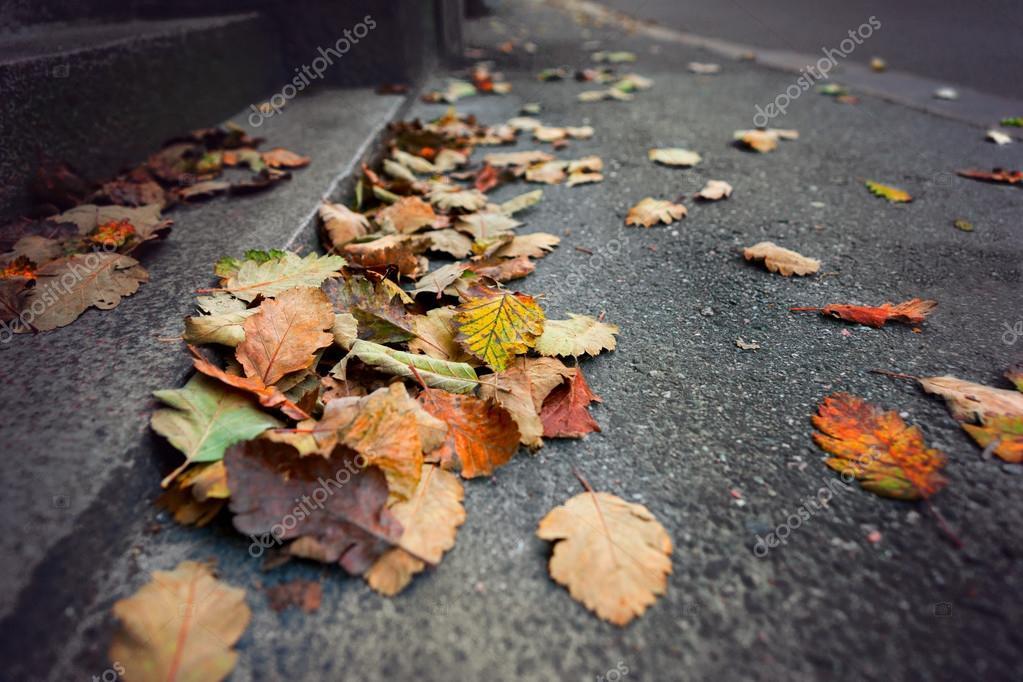 Colorful leaves on gray sidewalk