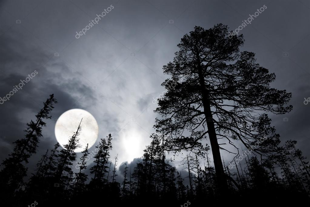 Spooky forest with big full moon