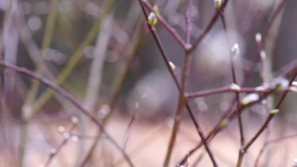 βίντεο από το μουνί