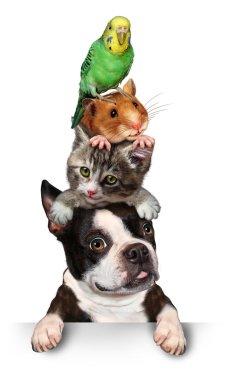 "Картина, постер, плакат, фотообои ""группа домашних животных"", артикул 55984829"