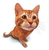 Boldog macska