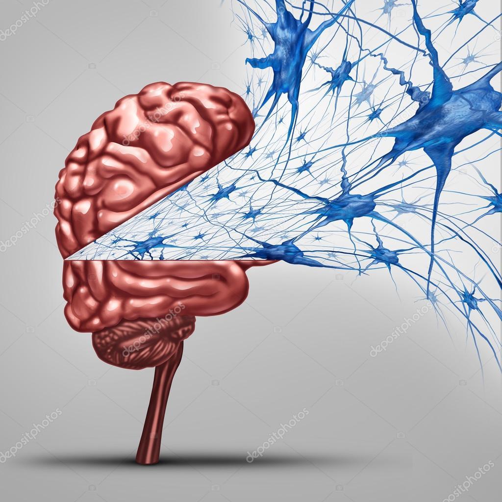 Concepto de las neuronas del cerebro — Foto de stock © lightsource ...