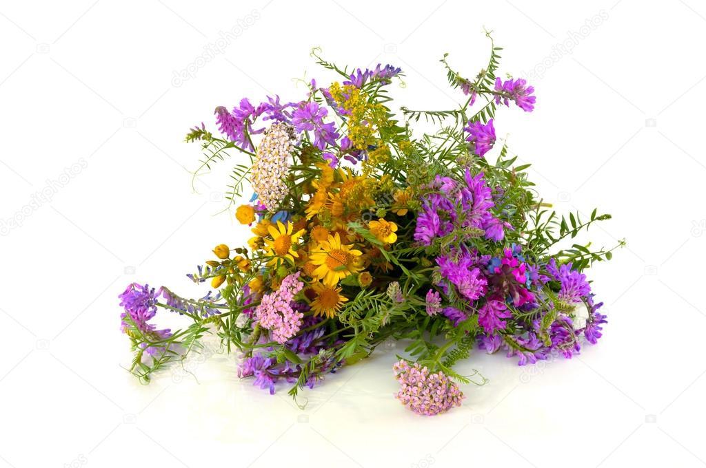 schönen Bouquet von wilden Wald Blumen auf einem weißen Hintergrund ...