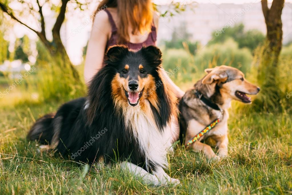 deux chiens assis c t de la femme dans l herbe un des chiens un collie photographie. Black Bedroom Furniture Sets. Home Design Ideas