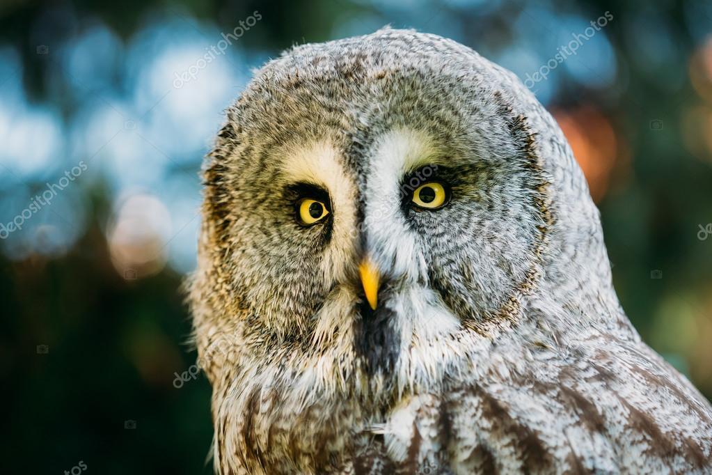 Μεγάλο πουλί στο πρόσωπο