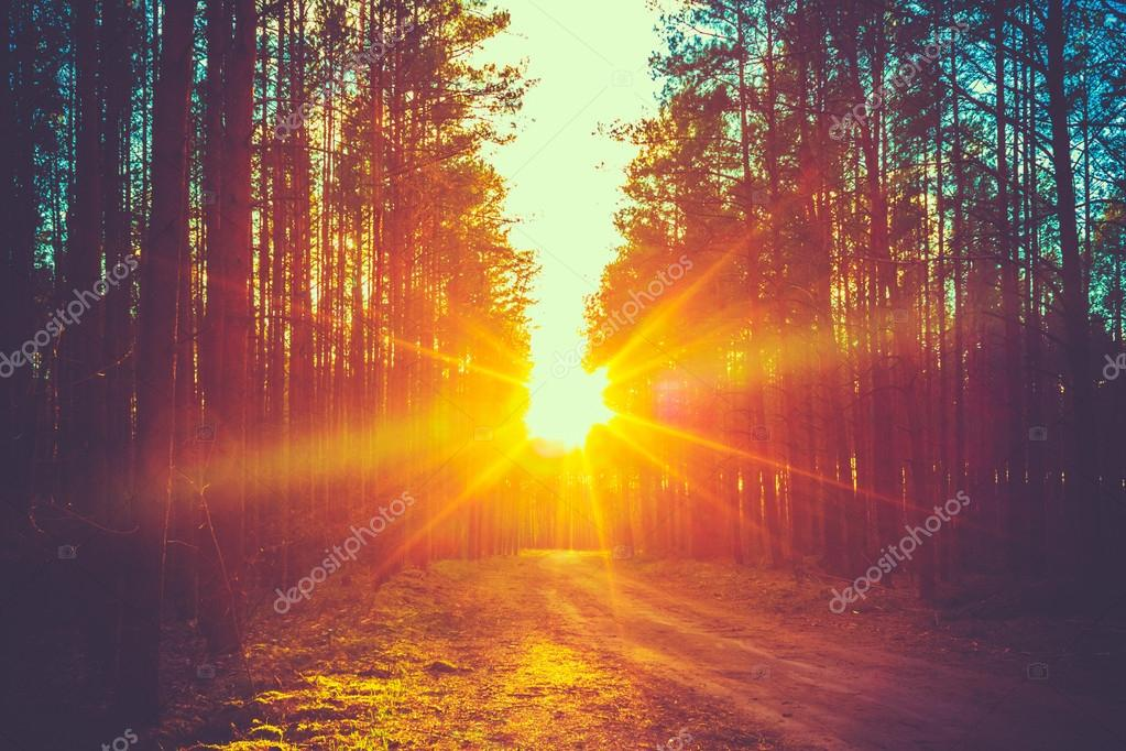 Фотообои Forest Road Sunset Sunbeams