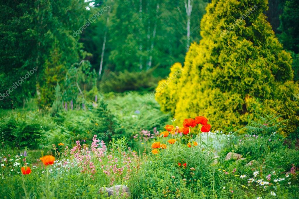 jardn diseo de jardines cama de flores verdes rboles y arbustos en u foto