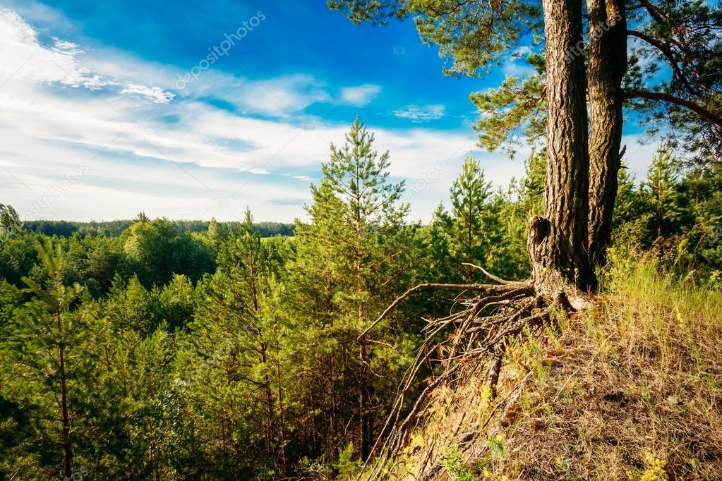 Green Summer Forest, Russian Nature