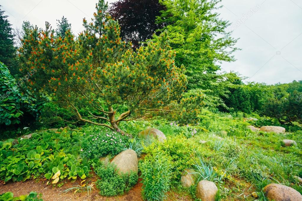 Boom Kleine Tuin : Tuin landscaping design bloem bed groene bomen en struiken in
