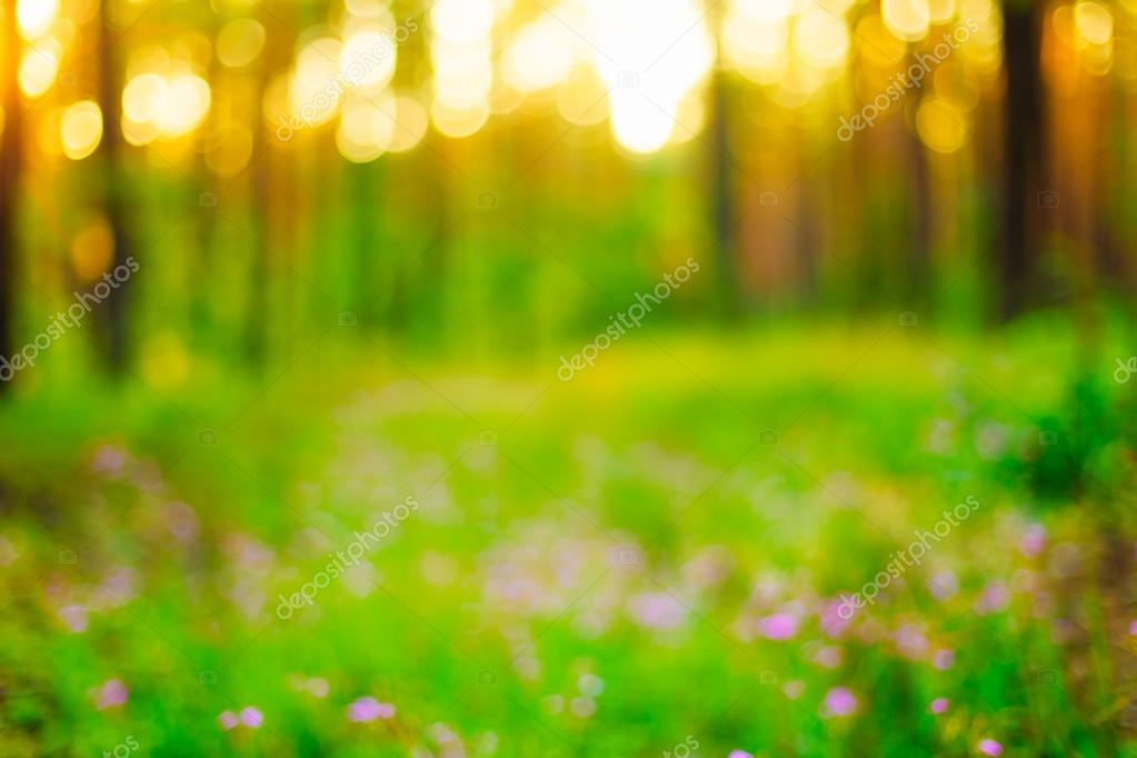 Nature Green Blurred Background Of Out Of Focus Forest Or Bokeh,