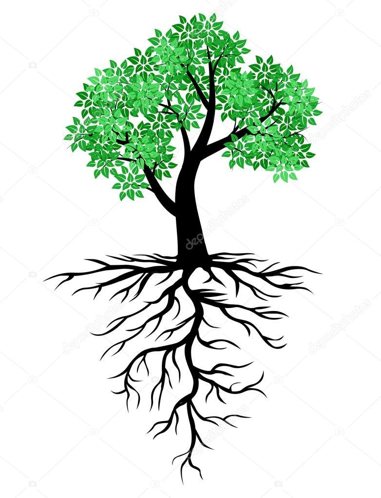Arbre Avec Racine icône d'arbre avec des feuilles vertes et les racines — image