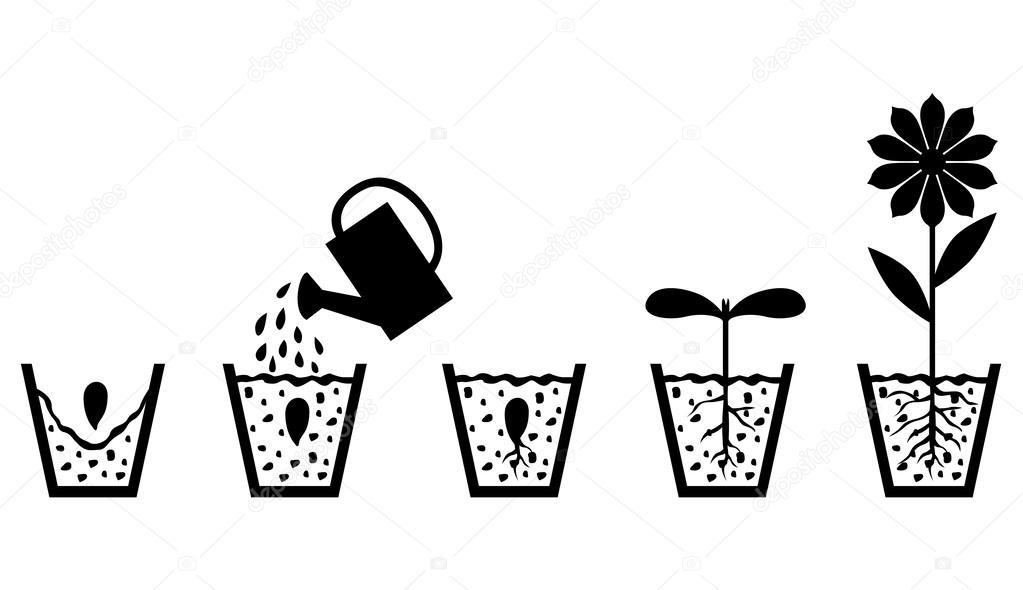 Zaadje Kleurplaat Regeling Van De Groei Van De Planten Uit Zaad Om Te