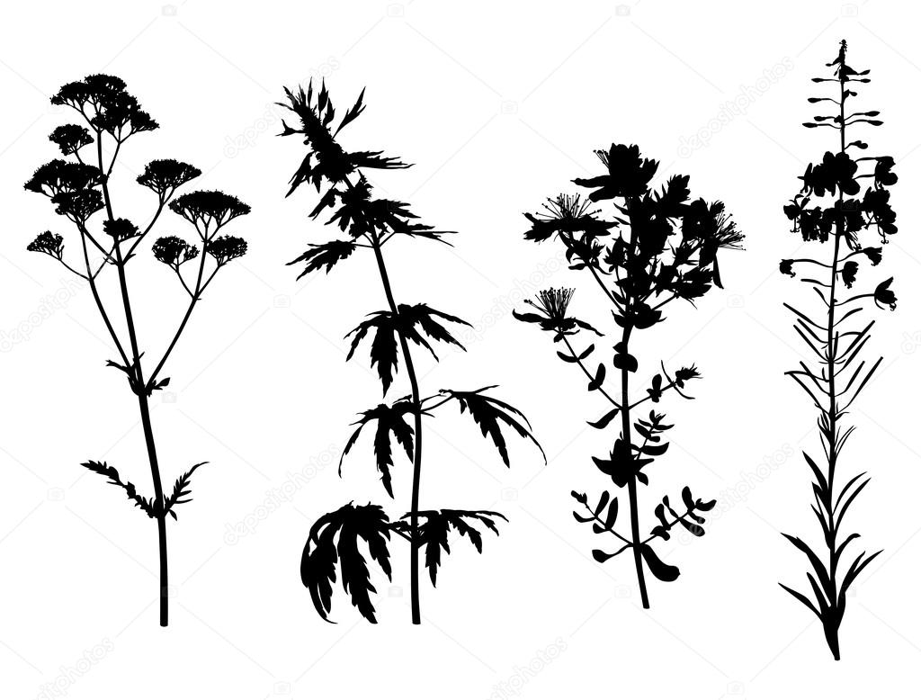 Medicinal herbals set