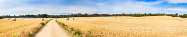 Straw field panorama