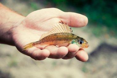 ruff fish lies on the palm
