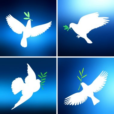 White dove with an olive branch against the blue of the bright sky in four different versions set the background. A symbol of peace and hope.