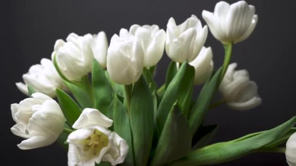 Pohled na elegantní bílé tulipány rotující na černém pozadí. Hromada bílých květin detailní-up makrofotografie. Rostliny se houpají ve větru. Dárek na dovolenou, příjemné překvapení. Jarní koncept 4K