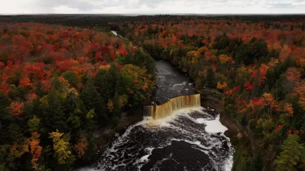 Beautiful panning in aerial fly over of Tahquamenon falls waterfall lowering towards the cascade and river surrounded by a landscape of evergreens and colorful deciduous tree autumn foliage.
