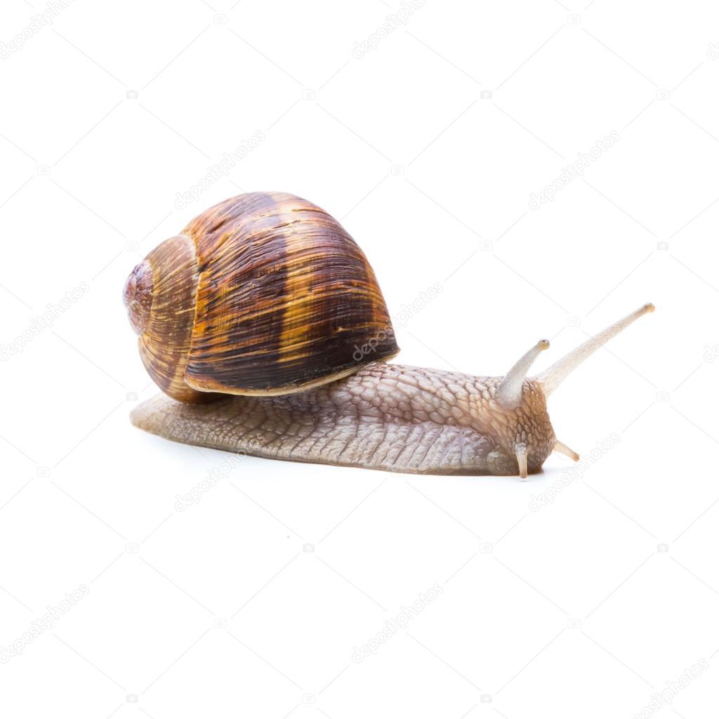 garden snail goes away