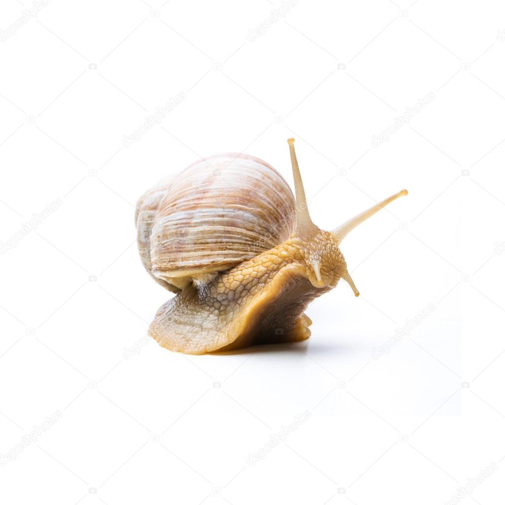 old snail