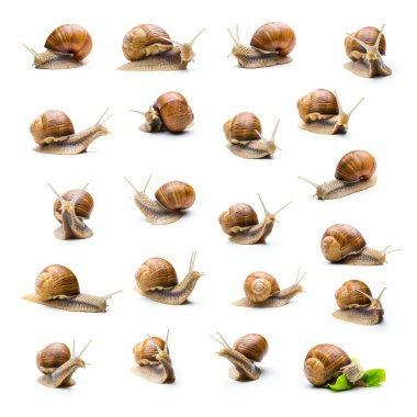 snail collage set