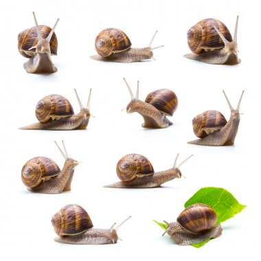 different snails set