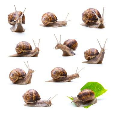 different snails set