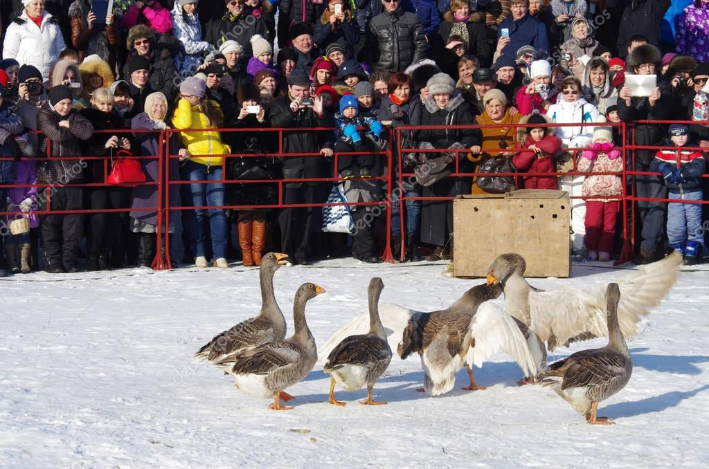 Goose fights on Shrovetide - the celebration and folk festival,