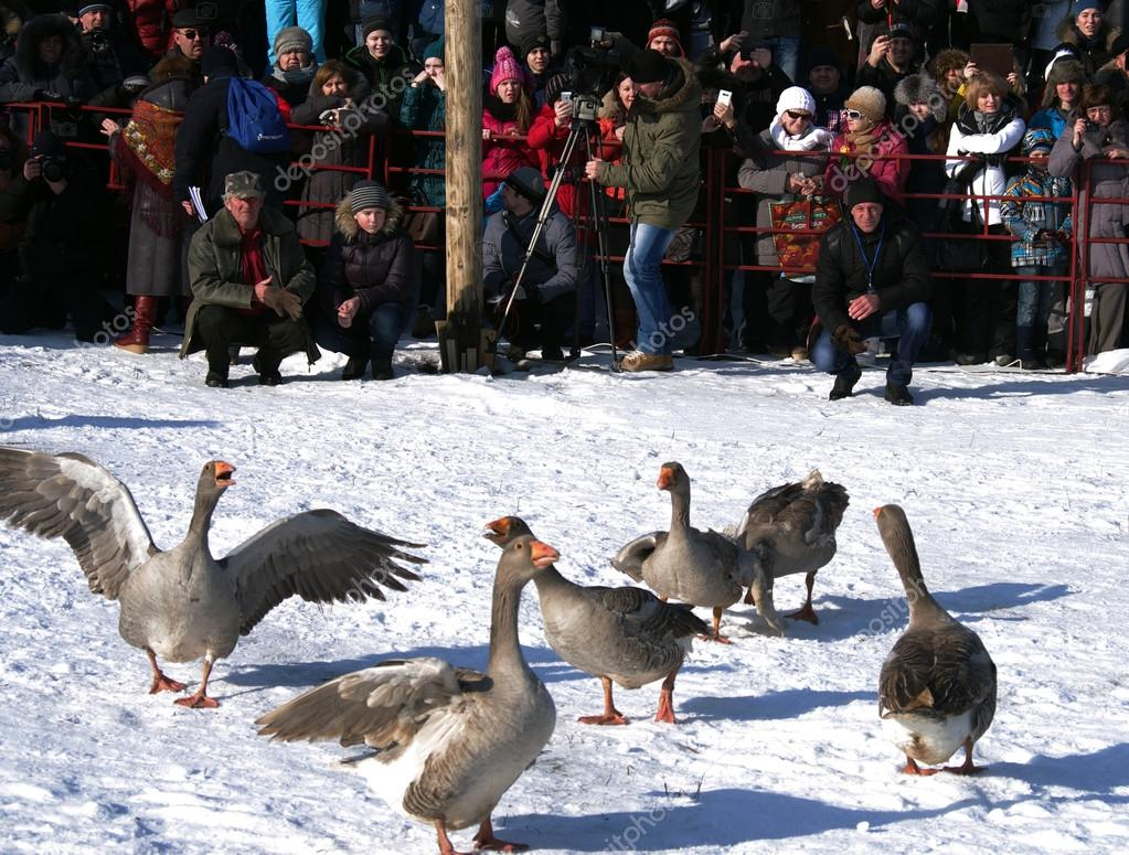 SUZDAL, RUSSIA - February 21, 2015: Goose fights on Shrovetide -