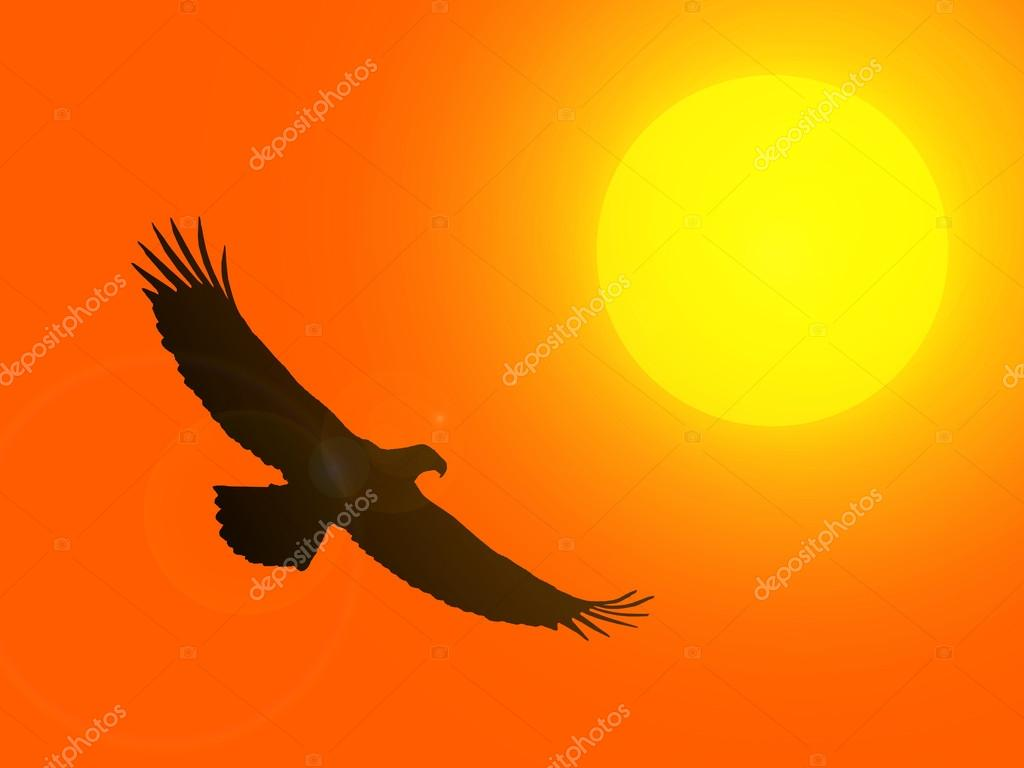 Silhouette of an eagle against the setting sun.