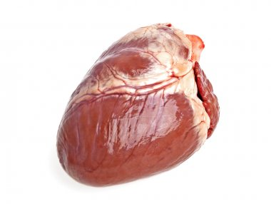 Pig heart on a white background stock vector