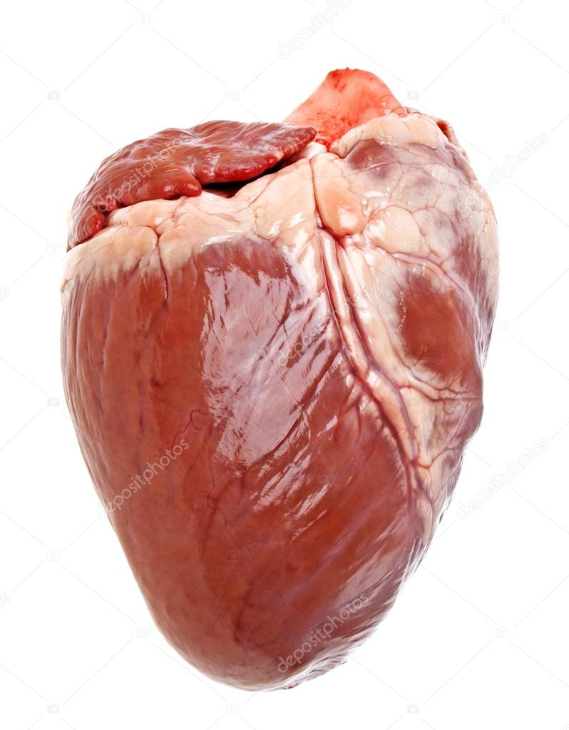 Pig heart on a white background