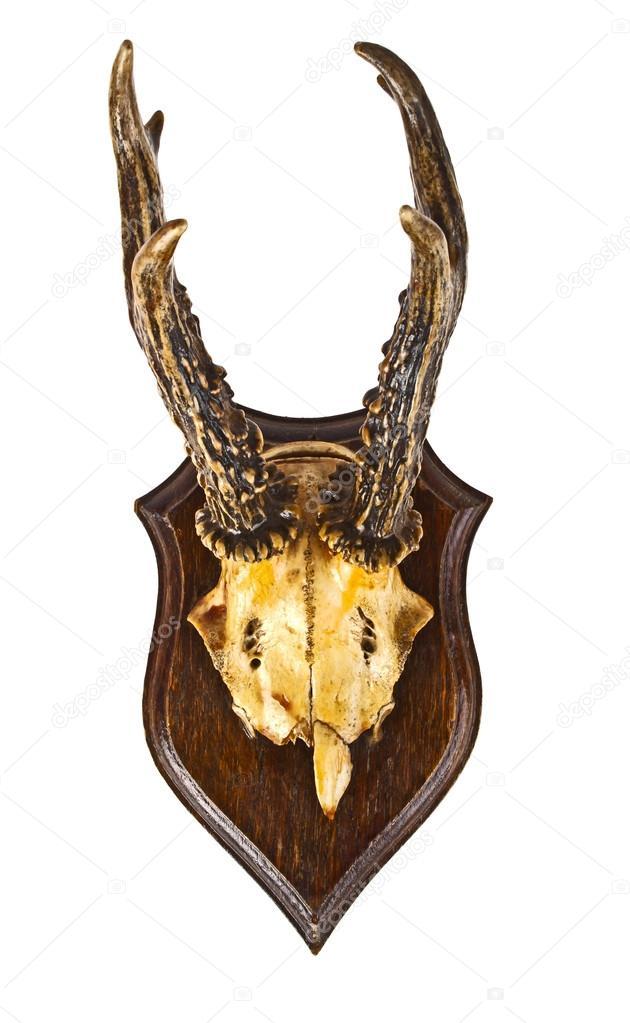 Λήψη royalty-free αρχείου White goat with horns in a barn close up - 73172683 διανυσματικών εικόνων από τη συλλογή του Depositphotos με.
