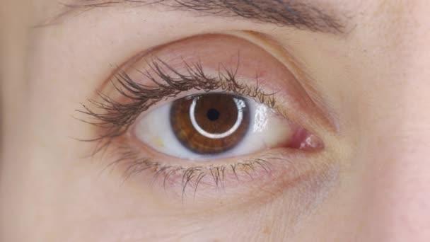 Schöne menschliche Augen aus nächster Nähe. Junge Frau braun ein Auge. Makro-Nahaufnahme Augen blinzeln und schauen. Augenlid, Iris, Sehvermögen.