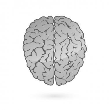 Human brain for medical design