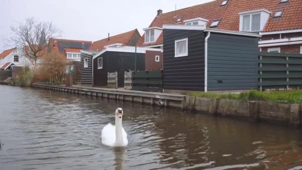 Schwäne im Kanal in Dutch Village auf der Insel Marken im Ijsselmeer oder früher Zuiderzee, Niederlande