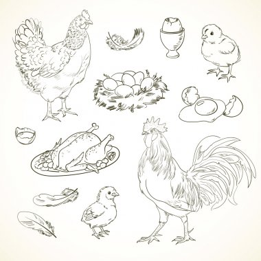 Freehand drawing chicken items