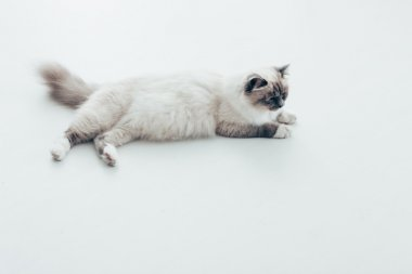 Pretty cat lying