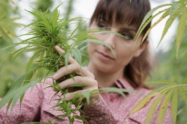 woman in a hemp field checking plants