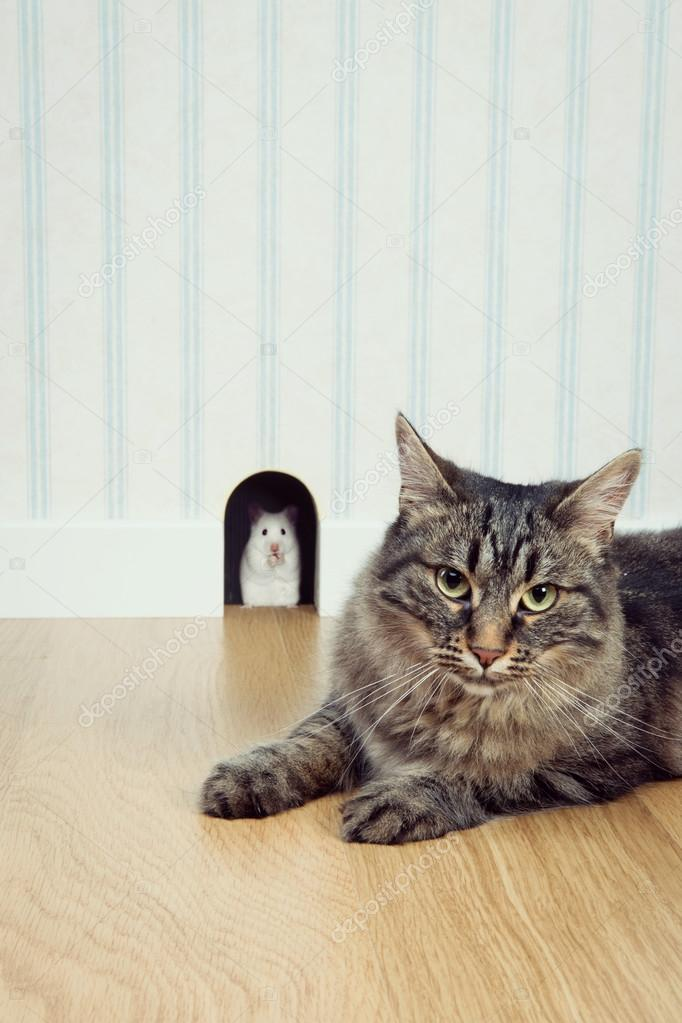 beaux trous de chatte Codi Milo pipe