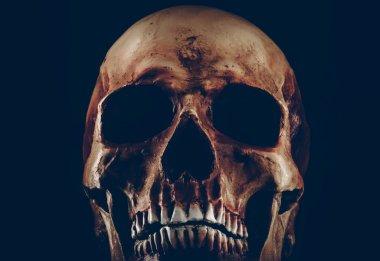 Creepy old skull