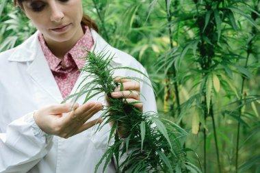 Scientist checking plants