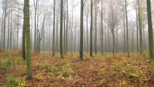 autumn in the forest aerial footage
