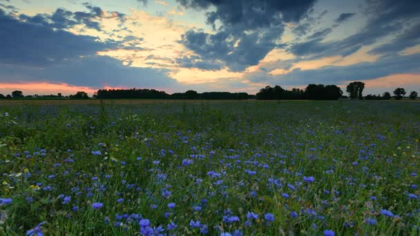 Beautiful sunrise over flowers field