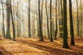 podzimní den v lese