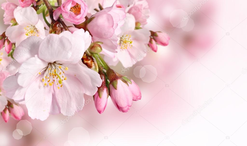 Spring flowers background with pink blossom stock photo pics4ads spring flowers background with pink blossom stock photo mightylinksfo Images