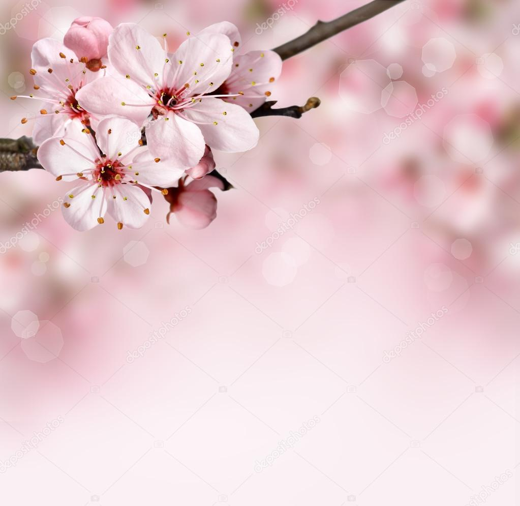 Spring Flowers Background With Pink Blossom Stock Photo Pics4ads