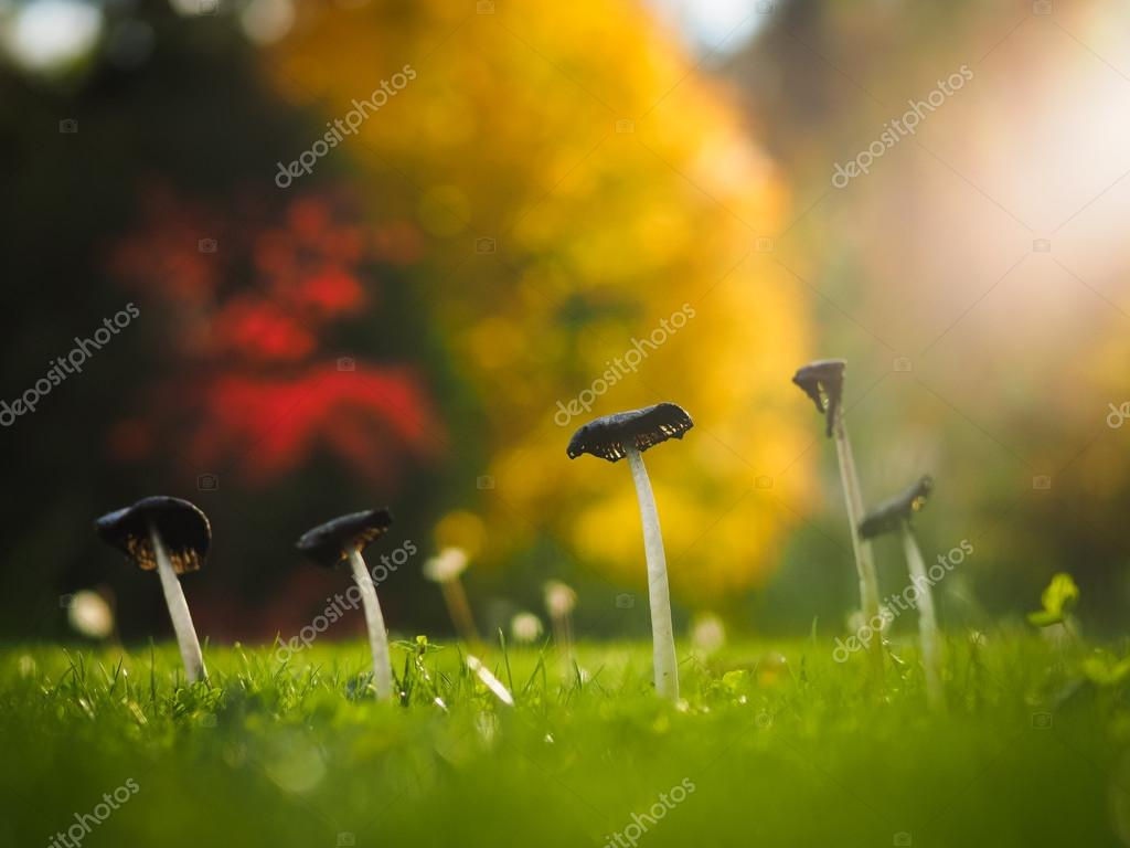 recipe: svampar i gräsmattan bilder [37]