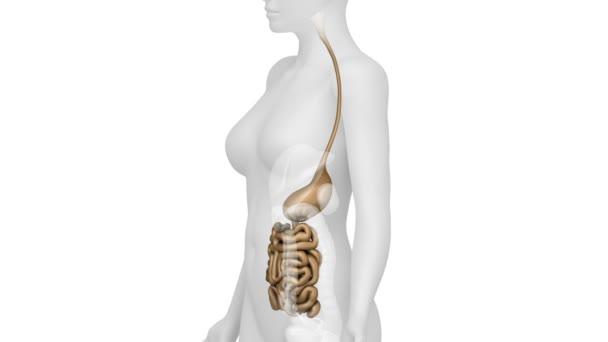 anatomie ženské odvahy